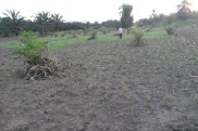Jordbruksprojekt DBF